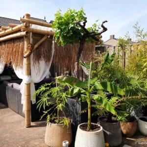 Bamboe pergola's